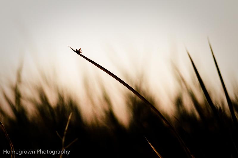 ©Sharon Sossaman